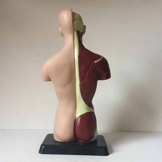 Small Medical Model Sculpture For Sale - Image 4 of 7