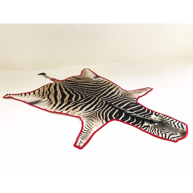 Red Forsyth Authentic Zebra Hide Rug Trimmed in Red Velvet For Sale - Image 8 of 8