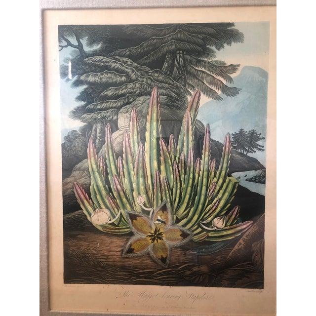Wood 19th Century Boho Chic Succulent Botanic Print For Sale - Image 7 of 12