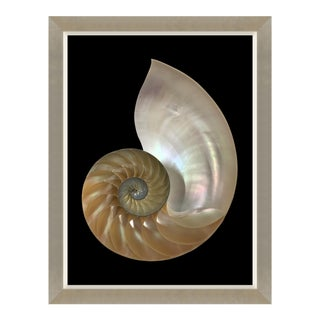 Spira Mirabilis I Print Framed Kenneth Ludwig Chicago For Sale