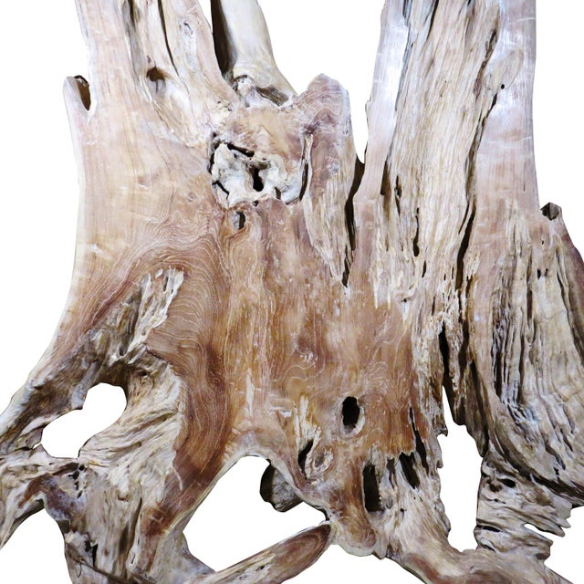 Organic Modern Natural Teak Root Sculpture For Sale In Boston - Image 6 of 7