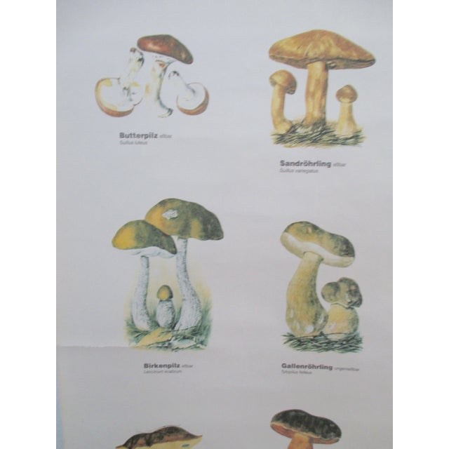 Vintage German School Science Mushrooms Chart - Image 3 of 7