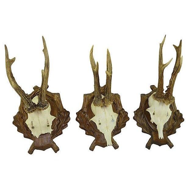 Antique Deer Antler Trophy Mount - Set of 5 - Image 3 of 6
