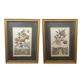 Antique Botanical / Garden Framed Prints by J. Pocker & Son - Set of 2 For Sale