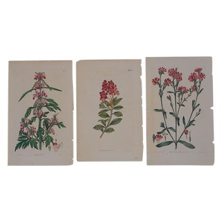 Antique Red Botanical Engravings- Set of 3 For Sale