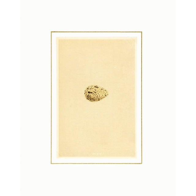 English Traditional Antique English Spotted Egg Print, 1859 For Sale - Image 3 of 3