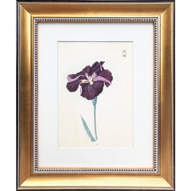 Japanese Iris Woodblock Botanical Print C.1900 For Sale