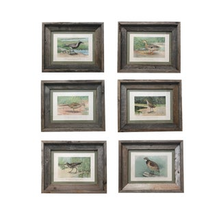 Vintage Bird Prints by Robert Ridgway, Framed in Reclaimed Barn Wood - Set of 6 For Sale