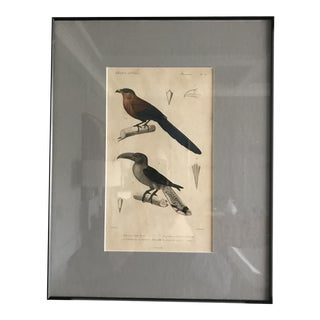 Early 20th Century Antique Framed Bird Print For Sale