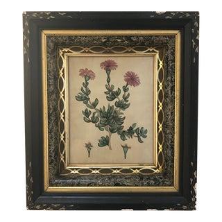Framed Antique Hand-Colored Botanical Illustration Engraving For Sale