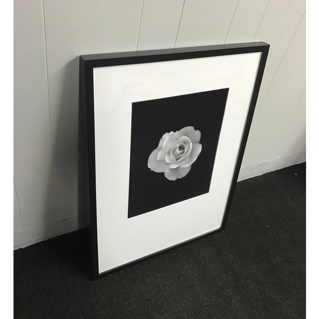 Black and white photograph of white rose in bloom in black gallery frame with white matting. Condition-like new.