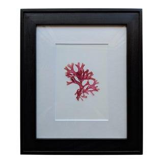 2010s Modern Framed Pressed Montecito California Seaweed