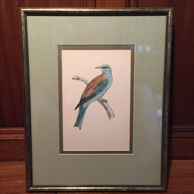 18th C. English Bird Prints in Matching Frames - Image 4 of 12
