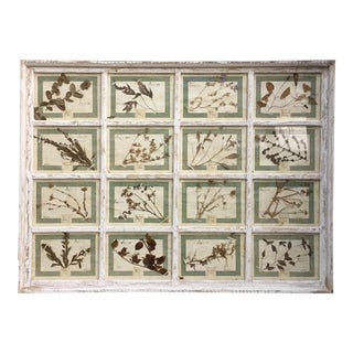 Vintage Italian Framed Botanical Herbarium Wall Hanging For Sale