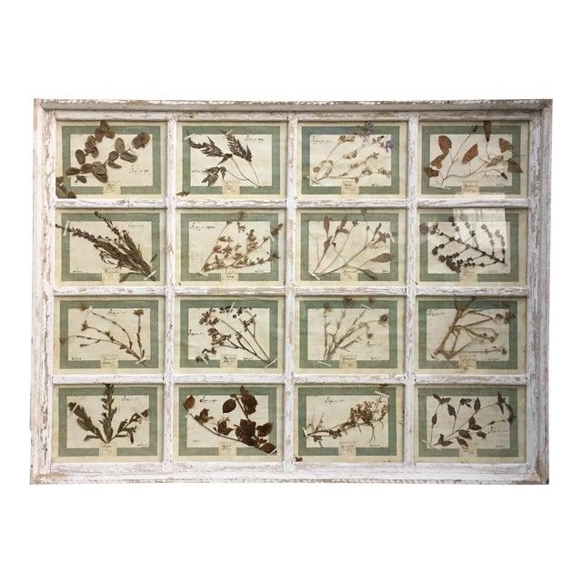 Vintage Italian Framed Botanical Herbarium Wall Hanging For Sale