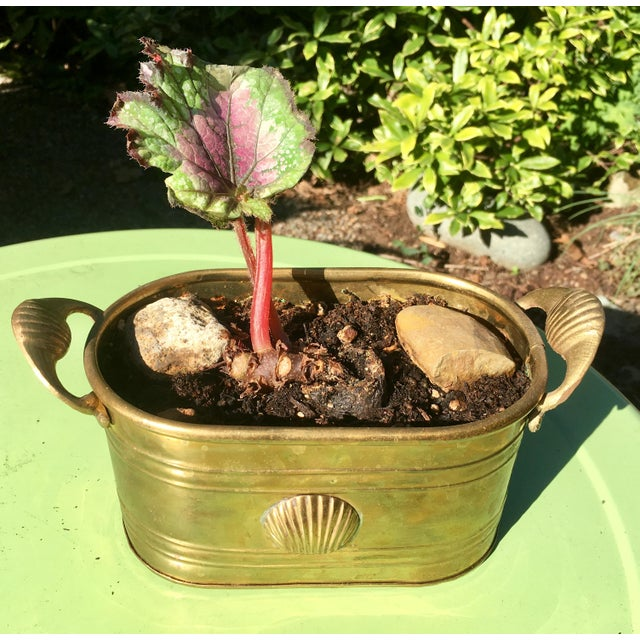 1960s Hollywood Regency Brass Oblong Planter With Shell Detail and Handles For Sale - Image 9 of 10