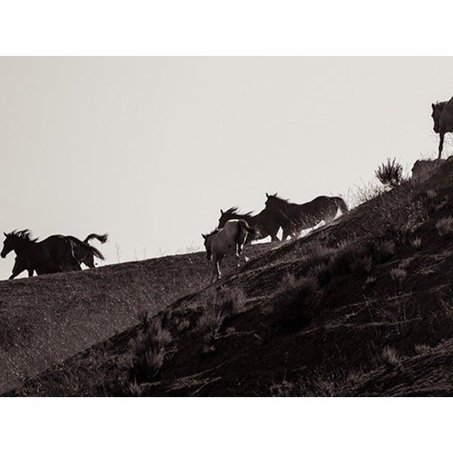 Americana Kimerlee Curyl, Band on the Run, 2014 For Sale - Image 3 of 5