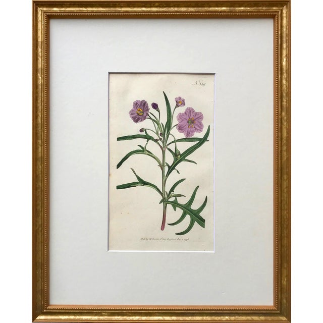 Original pair of l antique Curtis floral botanical hand colored etchings c.1796. Presented in archival matte and framed in...