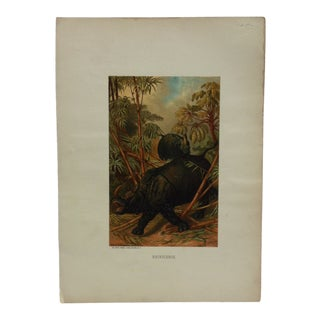 "Vintage Mounted Color Animal Print, ""Rhinoceros"" by Selmar Hess Publisher For Sale"