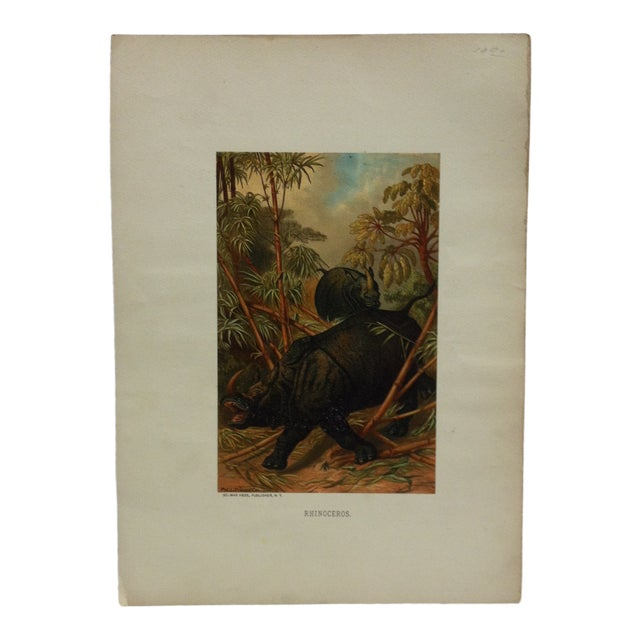 """Vintage Mounted Color Animal Print, """"Rhinoceros"""" by Selmar Hess Publisher For Sale"""