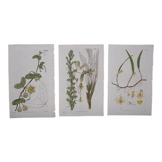 Antique Botanical Engravings - Set of 3 For Sale