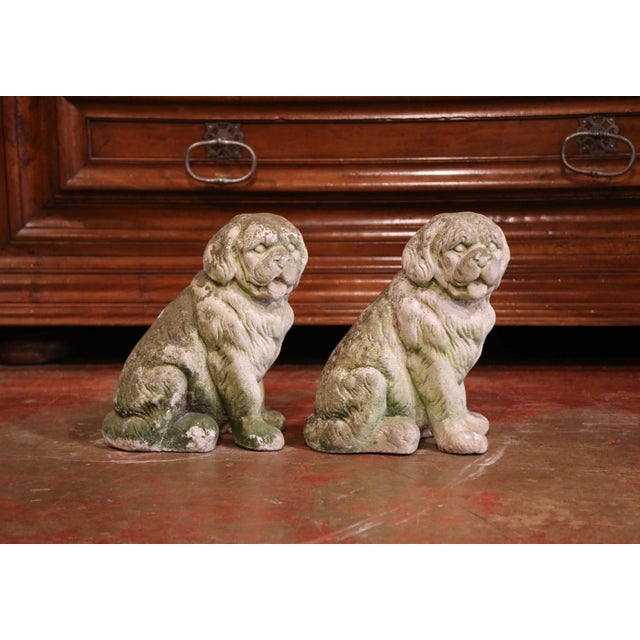 Late 20th Century French Vintage Patinated Cast Stone Saint Bernard Dogs Sculptures - a Pair For Sale - Image 5 of 9