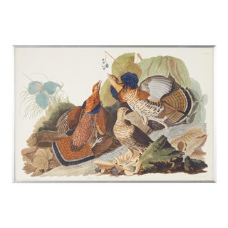 Audubon Ruffed Groüse Plate #41 Havell Edition For Sale