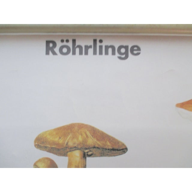 Vintage German School Science Mushrooms Chart - Image 6 of 7