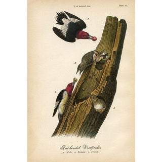 Red Headed Wookpecker, 1880s Lithograph For Sale