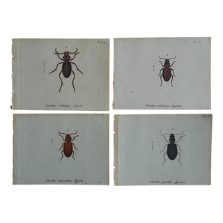 Antique Insect Engravings C.1760 - Set of 4 For Sale