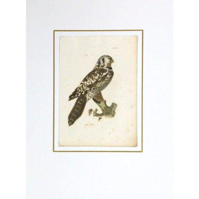 Antique Bird of Prey Engraving Print, C. 1850 - Image 4 of 4