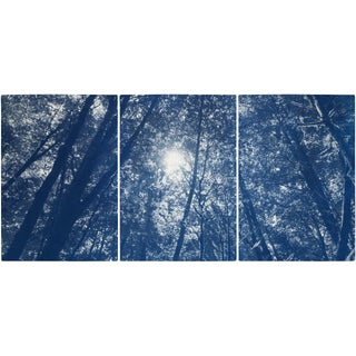 """""""Looking Up at the Trees"""" Contemporary Handmade Cyanotype Print by Kind of Cyan - Set of 3 For Sale"""