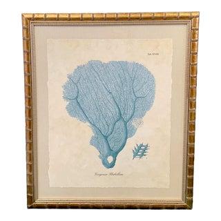 1980s Sea Fan Oceanic Framed Print For Sale