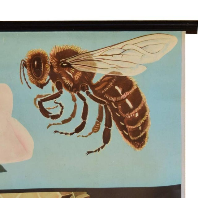 German Educational Poster of Wasps - Image 3 of 4