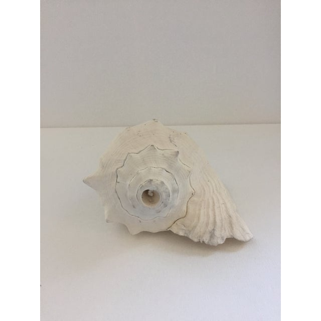 Boho Chic Large Conch Shell For Sale - Image 3 of 6
