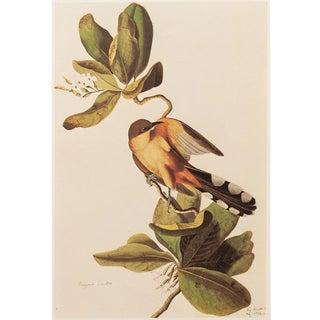 "1966 ""Mangrove Cuckoo"" Lithograph Print by Audubon For Sale"