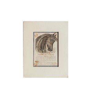 Antique Perfect Horse Newspaper Print For Sale