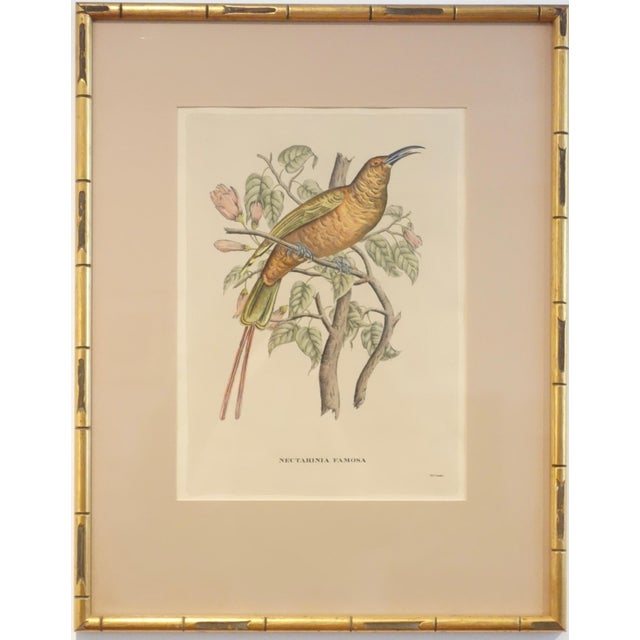 Illustration Antique Bird Print by J. Gould, Circa 1875 For Sale - Image 3 of 3