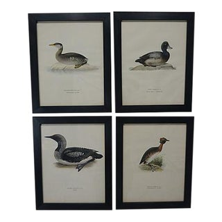 1929 Vintage Swedish Waterfowl Prints - Set of 4 For Sale