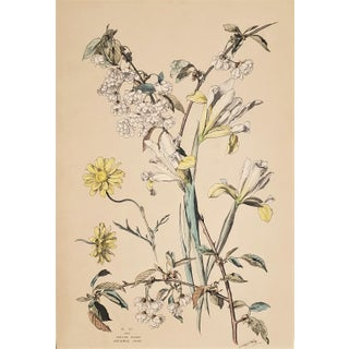 C1880 French Botanical Chromolithograph-Iris, Cherry Blossom, Matted For Sale