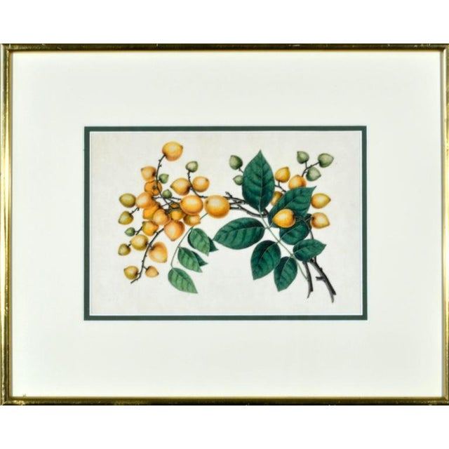 Chinese Fruit Watercolor Paintings on Pith Paper - Set of 8 For Sale In Philadelphia - Image 6 of 10