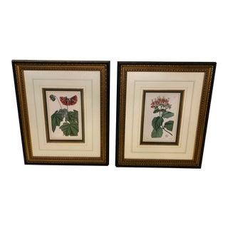 Antique Floral Botanical Engraving Prints - a Pair