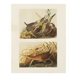 1966 Cottage Style Print of Green Heron & King Rail by John James Audubon For Sale