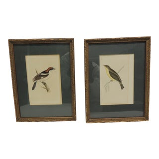 Vintage Steel Hand Engraved Bird Pictures - a Pair For Sale
