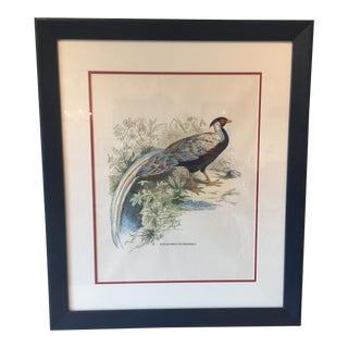 Vintage Audubon Bird Print