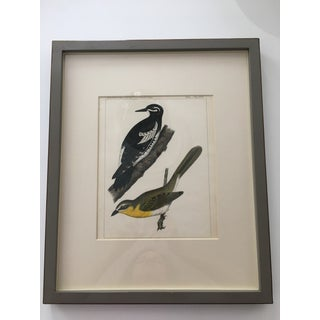 Vintage Mid-Century Bird Print Preview