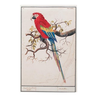 "1590s Small ""Scarlet Macaw"" Print by Anselmus De Boodt For Sale"