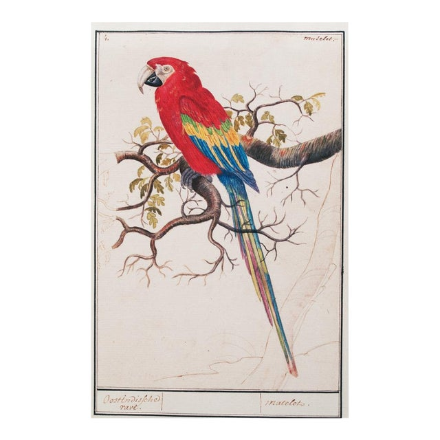 """1590s Small """"Scarlet Macaw"""" Print by Anselmus De Boodt For Sale"""