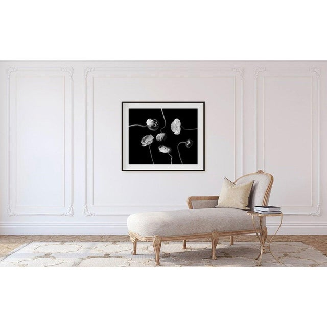 Contemporary Original Signed and Numbered 'Poppies II' Contemporary Framed Photograph by Jean Karotkin For Sale - Image 3 of 4