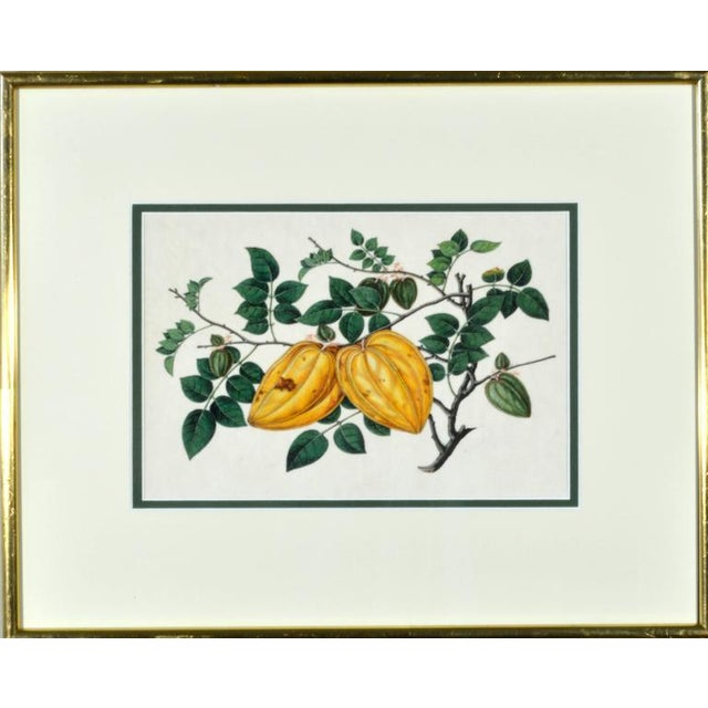 Chinese Fruit Watercolor Paintings on Pith Paper - Set of 8 For Sale - Image 9 of 10